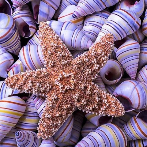 stars are born // among a sea of shells, be the odd one out #shinebright #unique #luvsurf #raddness #shellwisdom