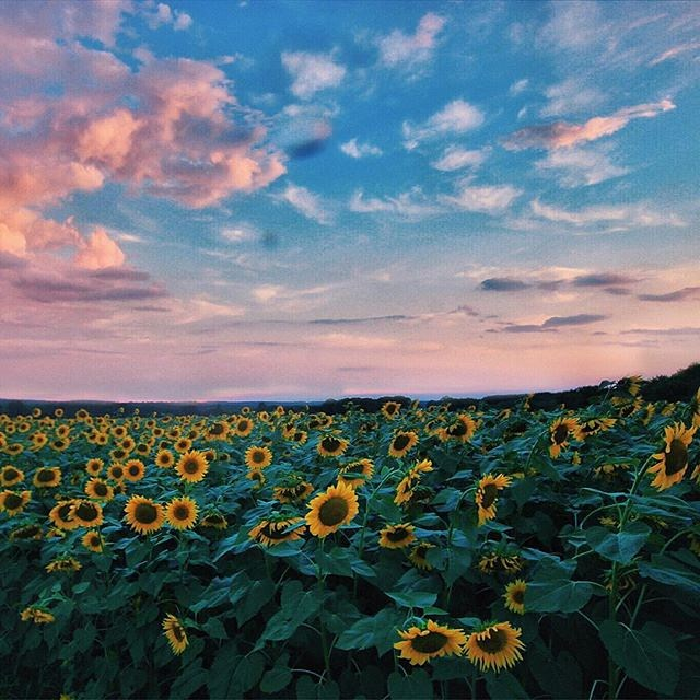 We all follow the sun. #Flowfold  Photo: @saucybrittbritt