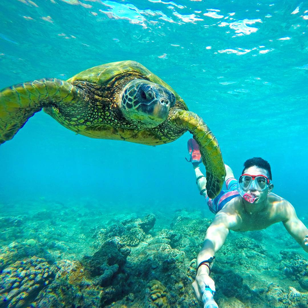 Turtle selfie in Maui, Hawaii. Photo: @curtis_chapman GoPro HERO4 | GoPole Reach #gopro #gopole #gopolereach #turtleselfie #hawaii #