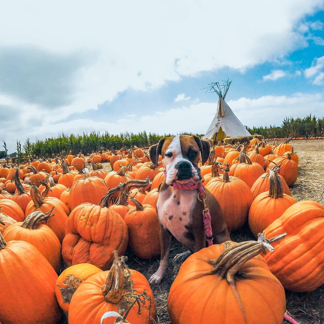 @dolly_tyler might be over #nationalpumpkinday, but we're not! #