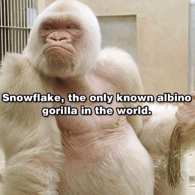 Snowflake!!!!! #snowflake #cuipo #saverainforest #savetheunknown Cuipo.org