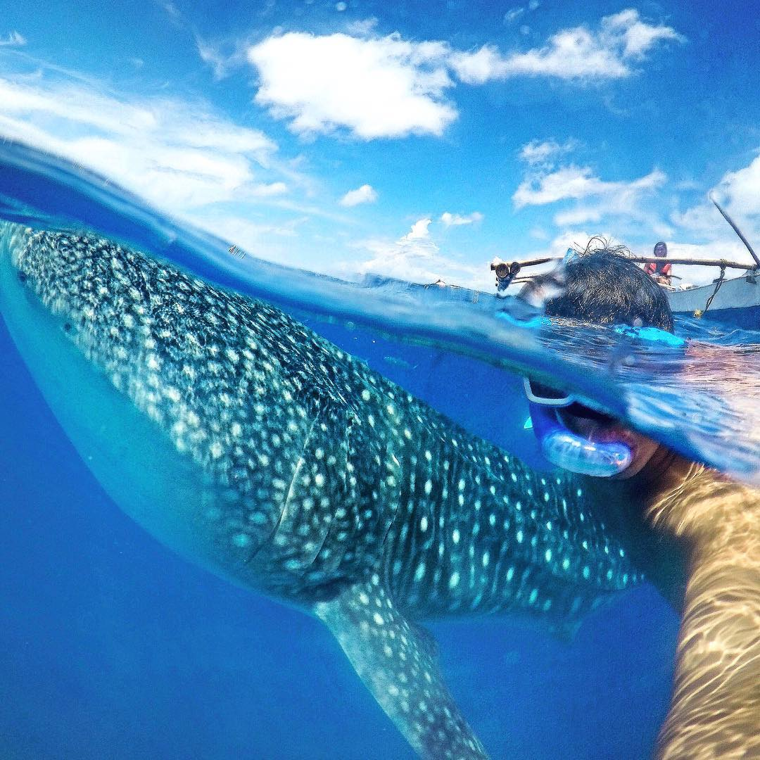 Whale watching in the Philippines. Photo: @ninjarod GoPro HERO4 | GoPole Bobber #gopro #hero4 #gopole #gopolebobber #whalewatching #