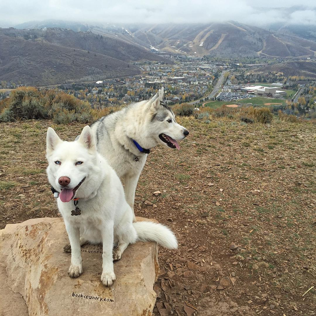 Rainy morning hike view with my two fur beasts. #wetdogsm#ParkCity #YukiTheDestroyer #BentleyChickenFingersBlock