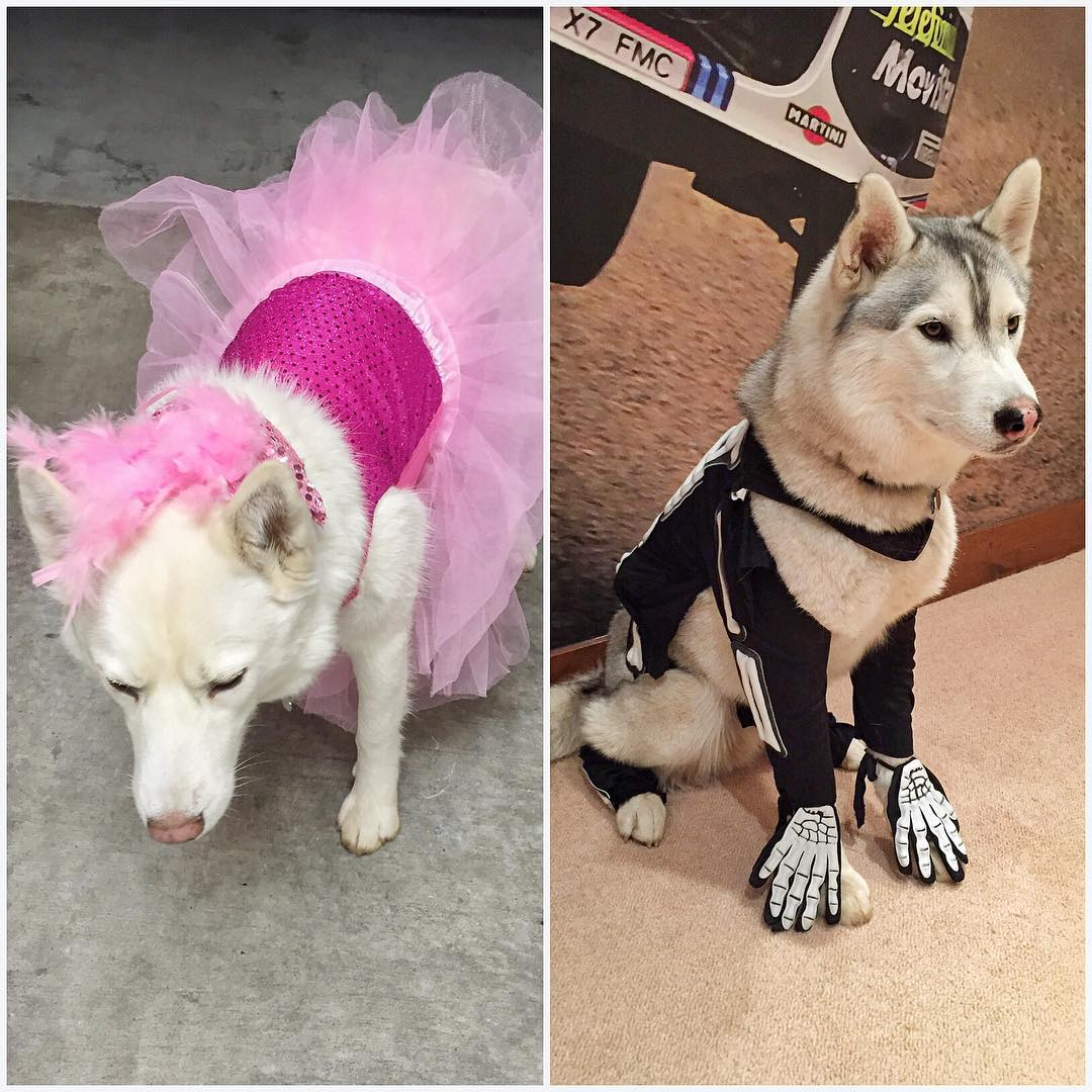 #BentleyChickenFingersBlock and #YukitheDestroyer got dressed up this year for Halloween. My kids thoroughly enjoyed everything about this - the dogs, not so much! Ha. Poor fur beasts. They get a nice, long hike through the mountains today for playing...