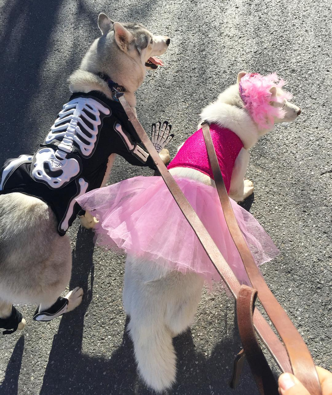 Yesterday's view while walking my poor, costume-tortured dogs as we walked around Main Street in Park City for Halloween for the Park City Dog Parade. They're used roaming through mountain trails, not dressing up! I think they were fairly embarrassed....