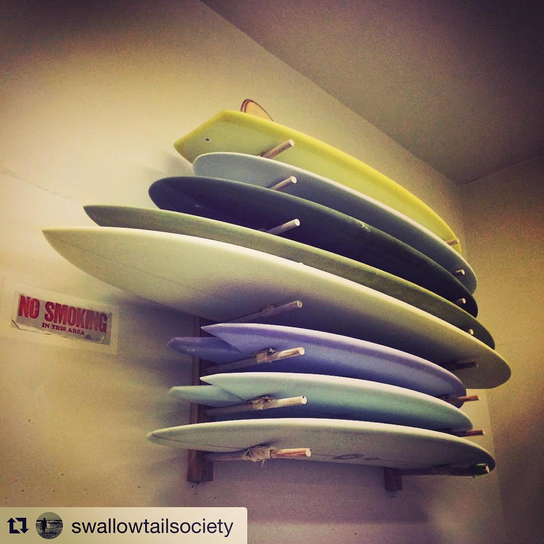 #Repost @swallowtailsociety ・・・ I need more space!