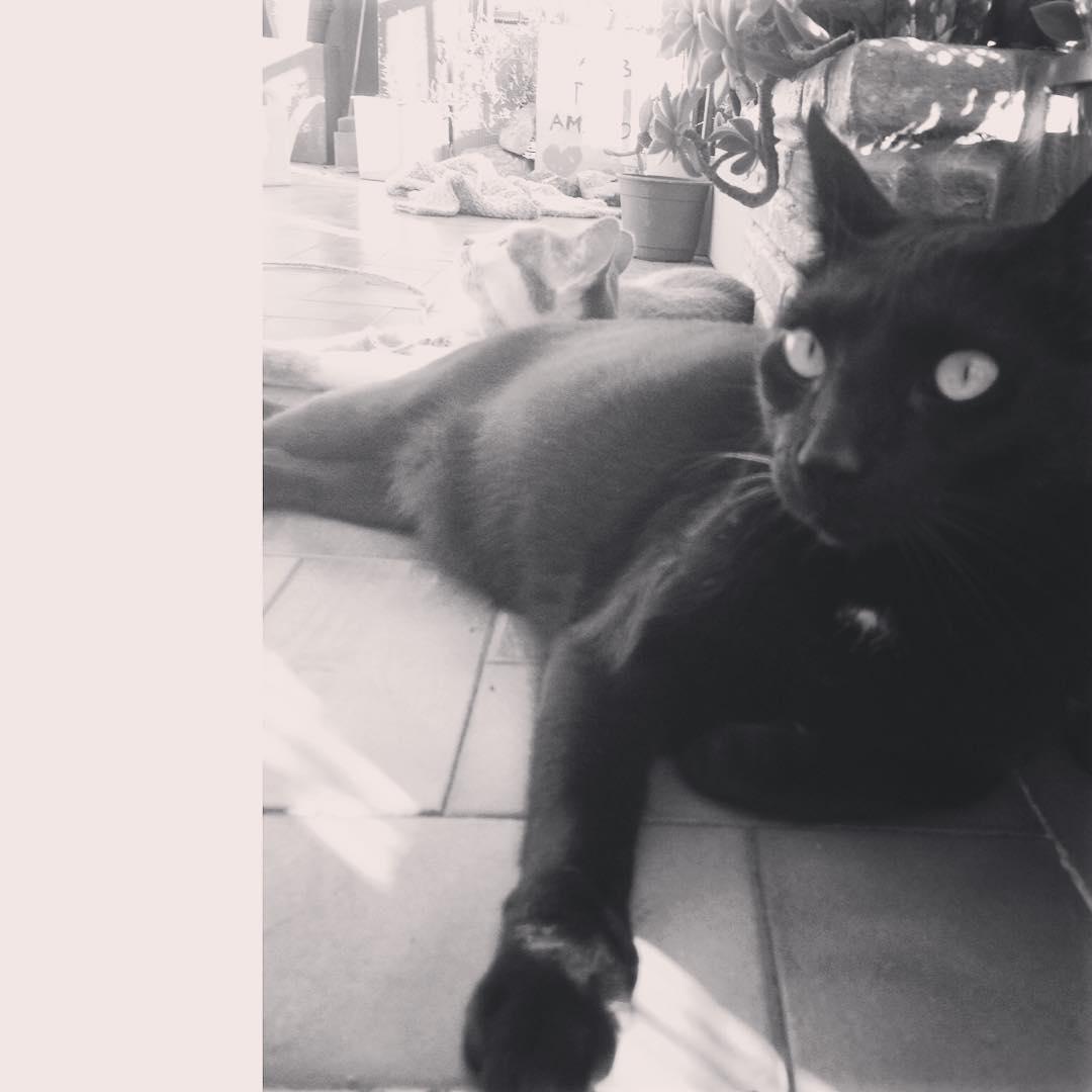 Al sol Tinto @tintoysoda #cat #black #negro #gato #gatonegro #amorgatuno @catsofinstagram