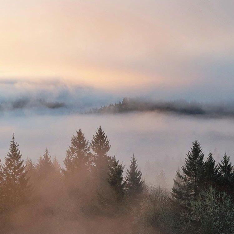 foggy vibes via @mrtommyblades