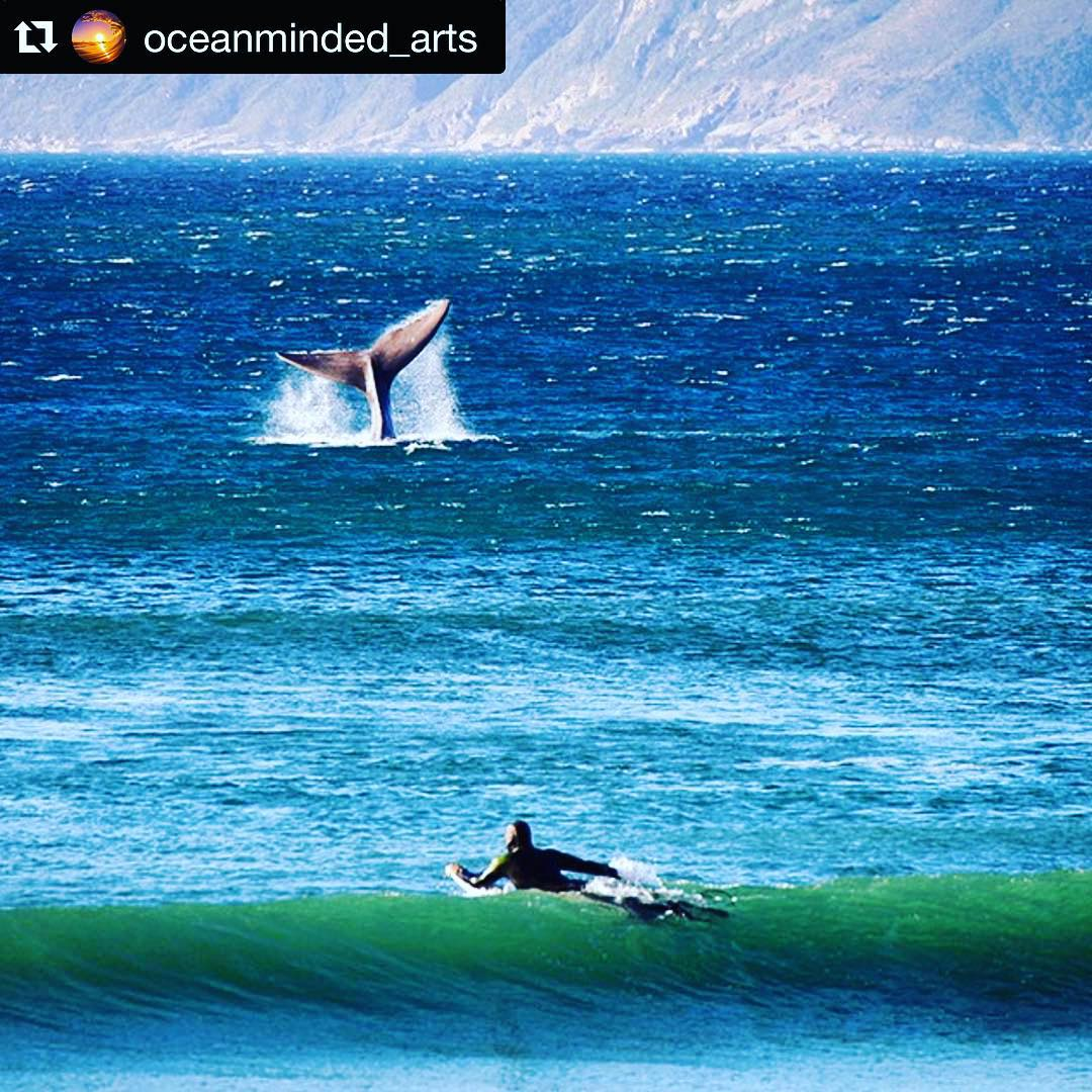 #Repost @oceanminded_arts ・・・ Tales of Whales  Feature by @daniel_grebe #oceanminded_arts  #wavetribebro #whalesandsurfers