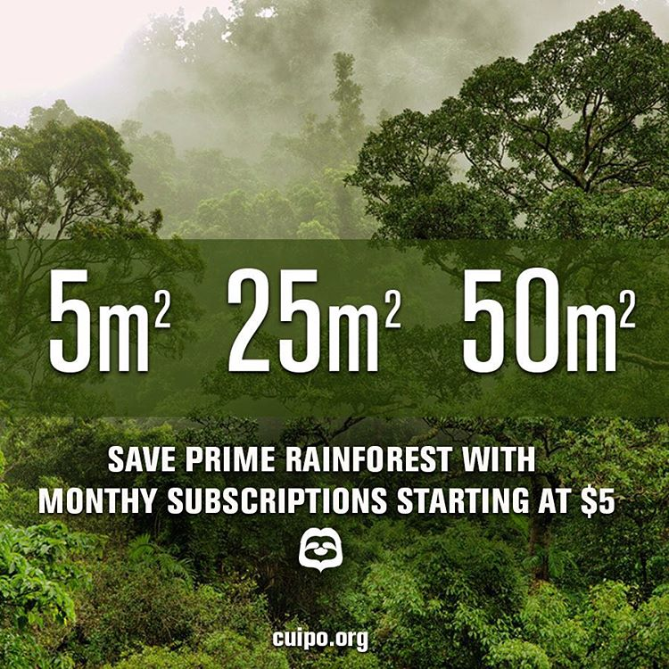 Did you know that you can #SaveRainforest with just the click of a button? Join the movement today and help stop #deforestation (link in profile)