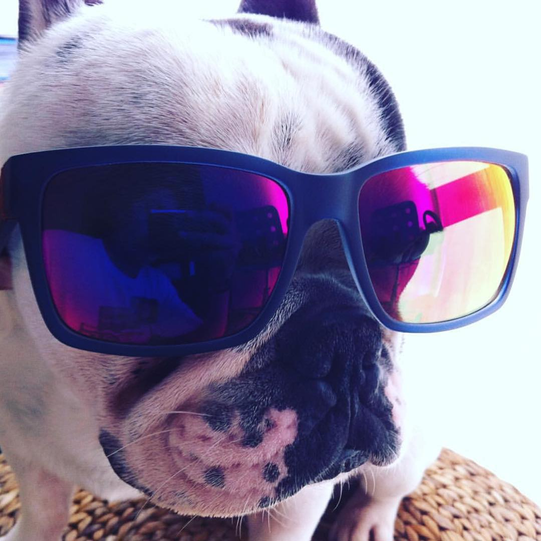 What up dog? This weeks #FanShotFriday winner is @dinismiranda and her rad pup! You can win too! Take a creative shot of your VZ gear and tag #VonZipper and we pick a new winner each week! #SupportWildLife