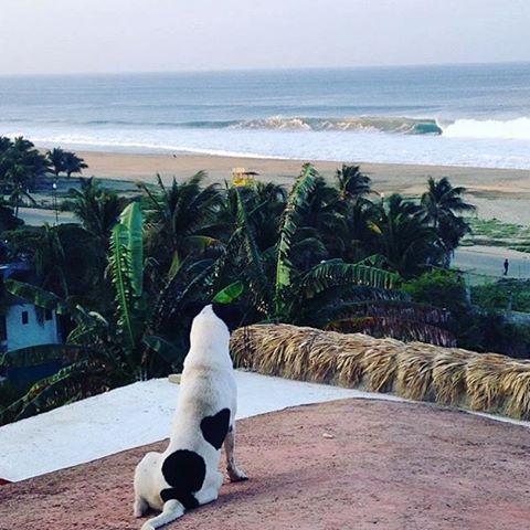 Fran y Parche chequean las olas @fran_ferreras #volcomsurf #cali #truetothis