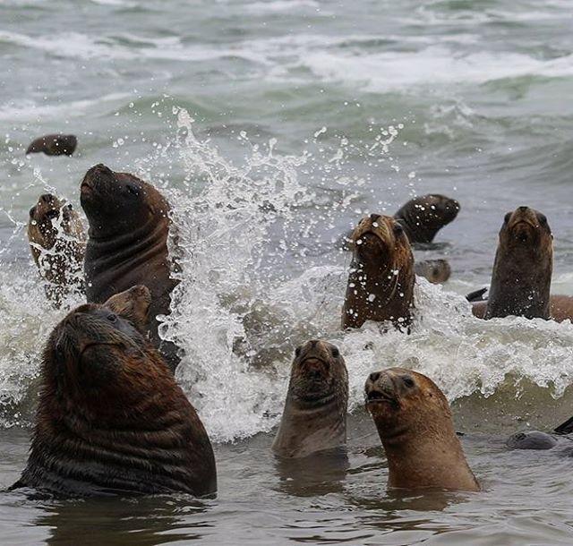Los guardianes de la punta de Tierra del Fuego (El Faro del Cabo San Diego) entre curiosos y asustados por nuestra visita.#peninsulamitre #tierradelfuego