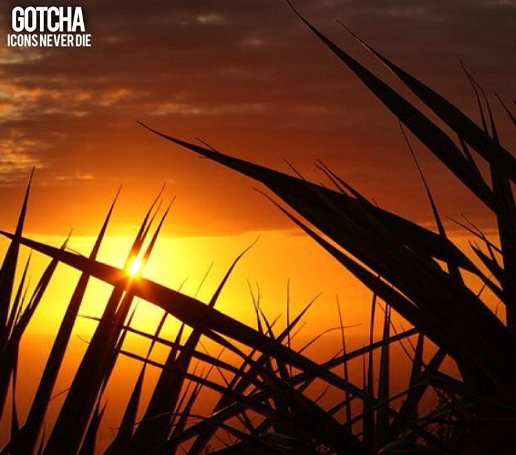 Un nuevo dia, una nueva semana, mas oportunidades! #gotcha #iconsneverdie