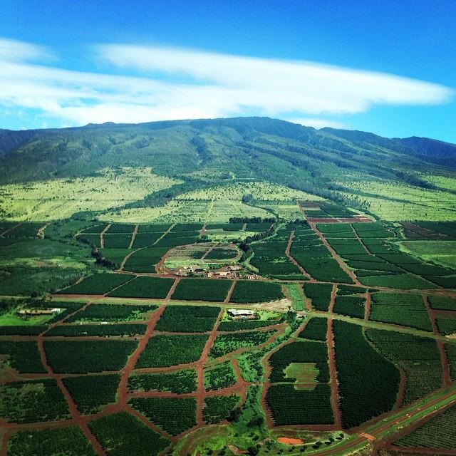 #dontpanicitsorganik west #Maui #mountains #organik #organikinmaui