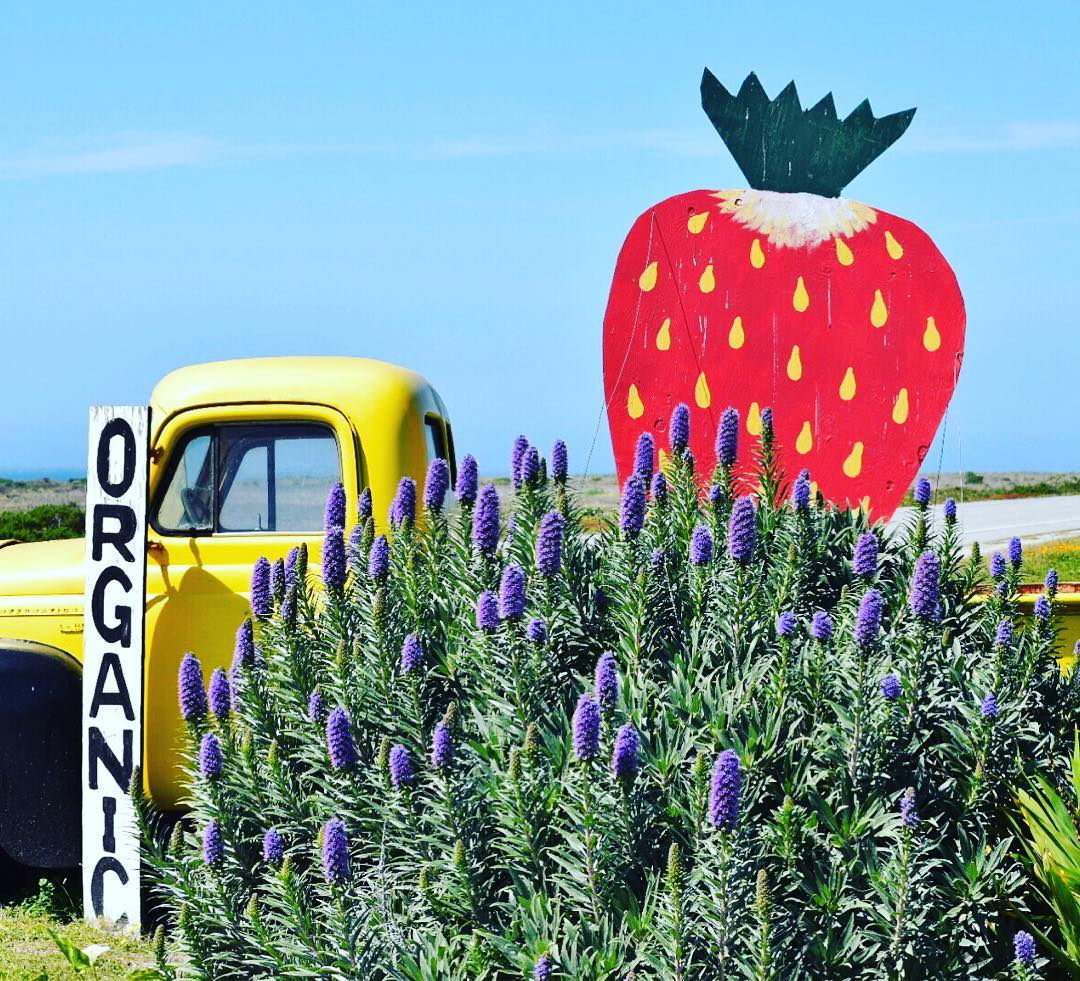 Just like the strawberries you find along Highway 1 just north of Santa Cruz, we make everything locally and straight from the earth. Whether it's surfaris amongst these strawberries (this weekend anyone?), or a Monday morning sesh before work- the...