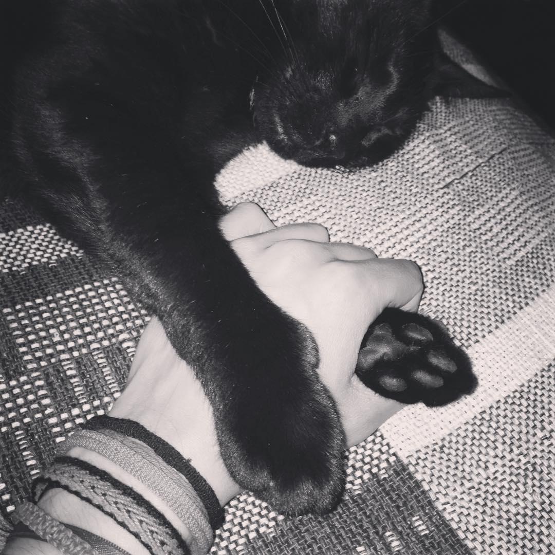 Manitos de la manito #cat #black #patas #gato #negro #amorgatuno #catlove