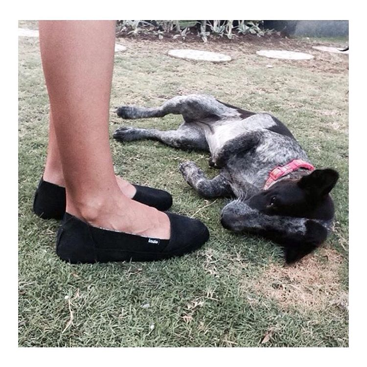 When your kicks are so fly your pup lusts after them.