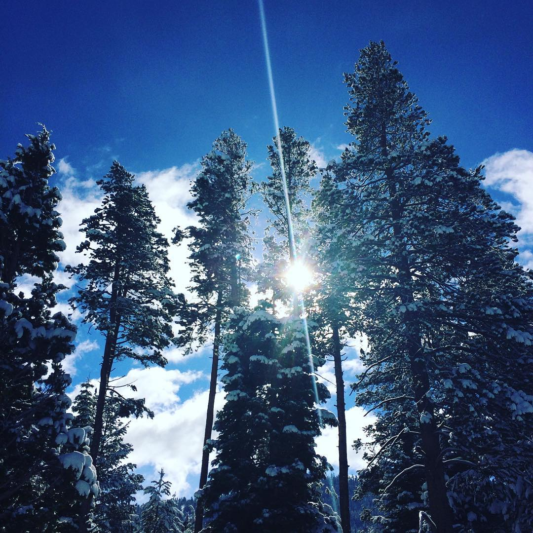 Winter is just shining right in on Tahoe.  #natureinspired #riseinspired #risedesigns #trees #tahoe #tahoesouth #tahoesnaps #meyerspride #elnino2015
