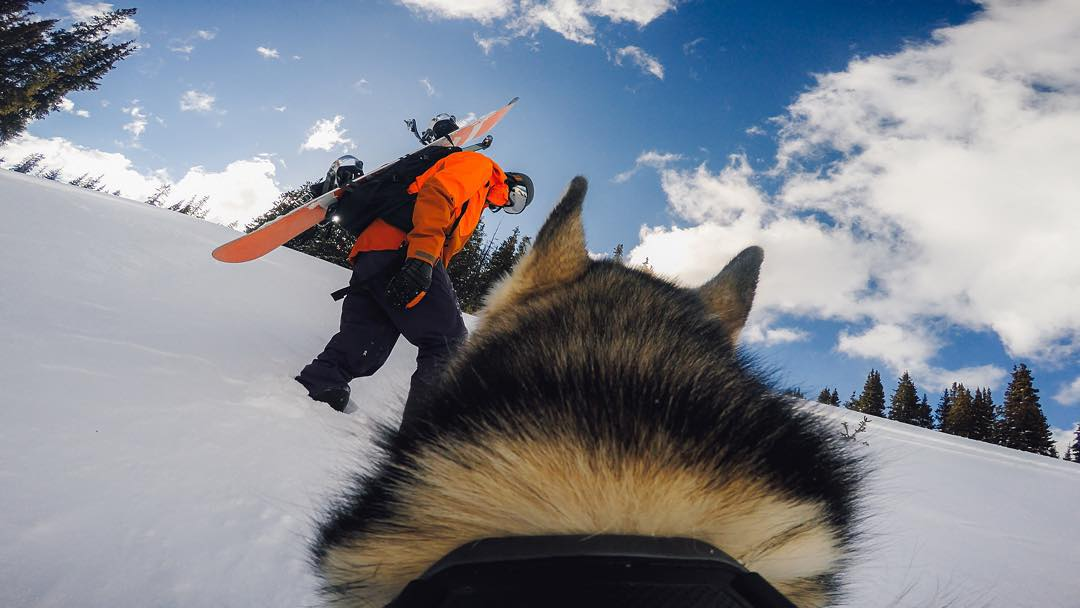 Loki and I started backcountry snowboarding together when he was four months old. Full grown now, his long legs let him move through the deep snow swiftly and effortlessly. The fetch mount turns Loki into my personal follow-cam photographer; it doesn't...
