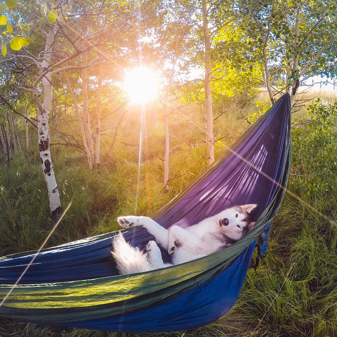 After a long day of running with the wind in Kenosha Pass, CO, Loki loves snuggling up to take a long nap in his hammock! This shot was taken after one of our more tiresome adventures, but I woke up early that morning to capture this moment. Loki is my...
