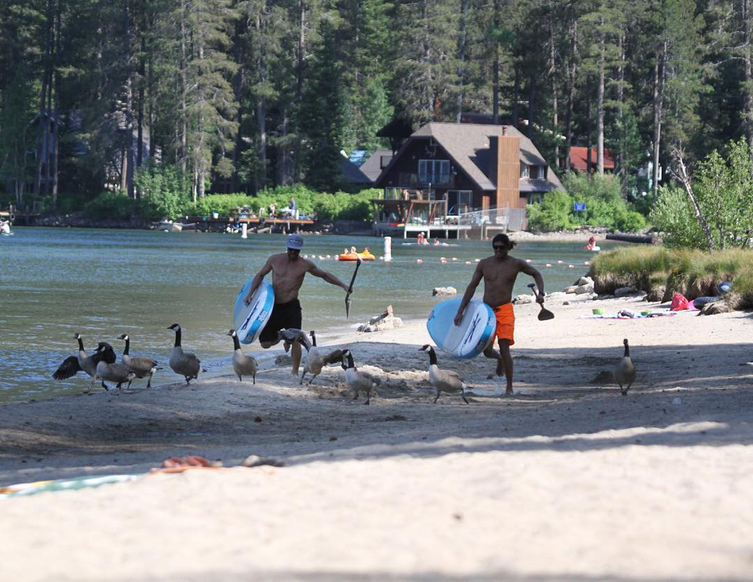 Photo of the Week: Herding the Geese #roguesup #sup #inflatableseries #standuppaddle #paddle #tahoe