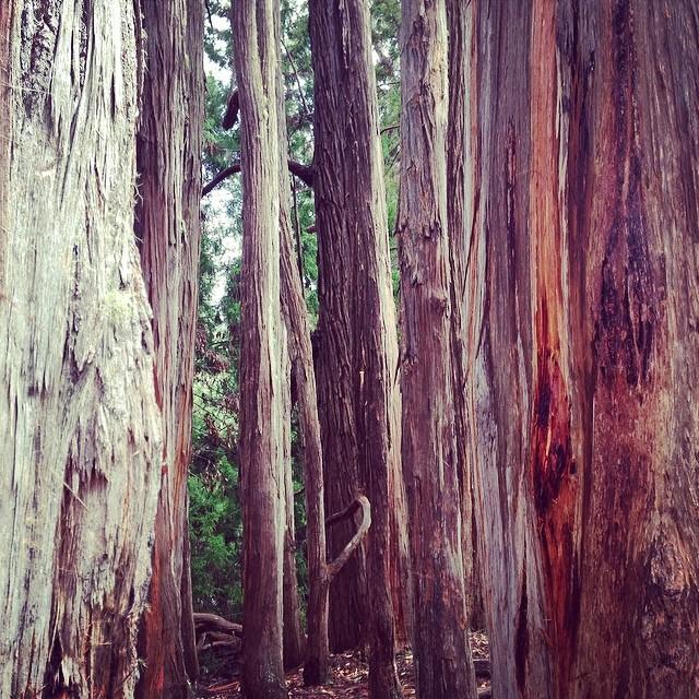 Back to #nature #organik in #Haleakala #volcano natl #park #trees #organic #maui #hawaii