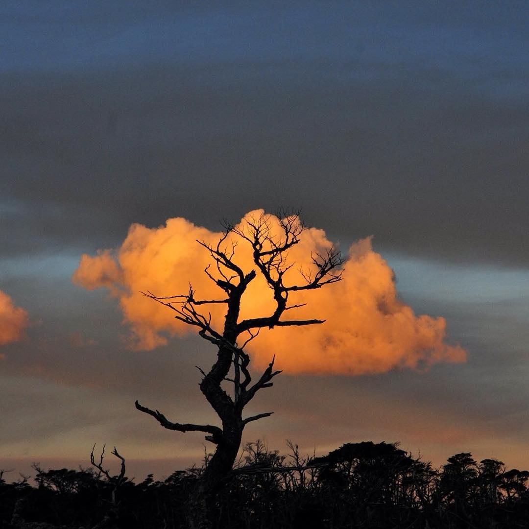 El árbol de algodón.  Ph. Sergio Anselmino #peninsulamitre #tierradelfuego #patagoniaargentina #conservemos