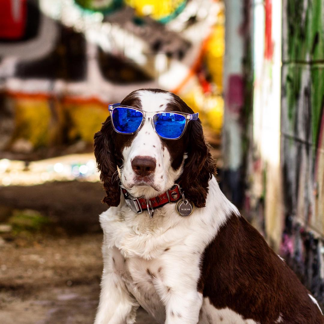 """It's Monday already? Woof."" Great snap of @rouxthespringer taken by @btwphotography"