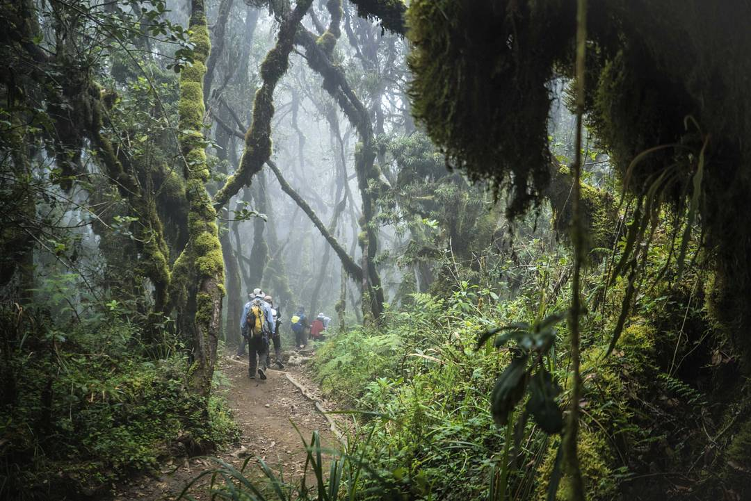 """Traveling to Tanzania is an incredible experience in itself, adding a climb up Kilimanjaro into the itinerary puts the journey into a category all its own. In 40 round trip miles i got to hike through 5 distinct climates, meet a crew of the coolest..."