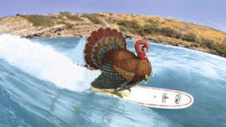My kind of #turkey! #happythanksgiving #surf