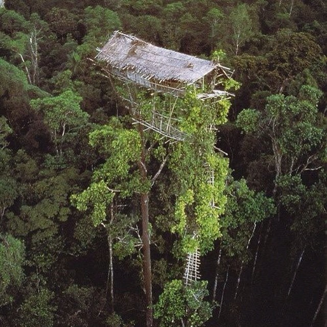 Find Your Tree House #lovematuse