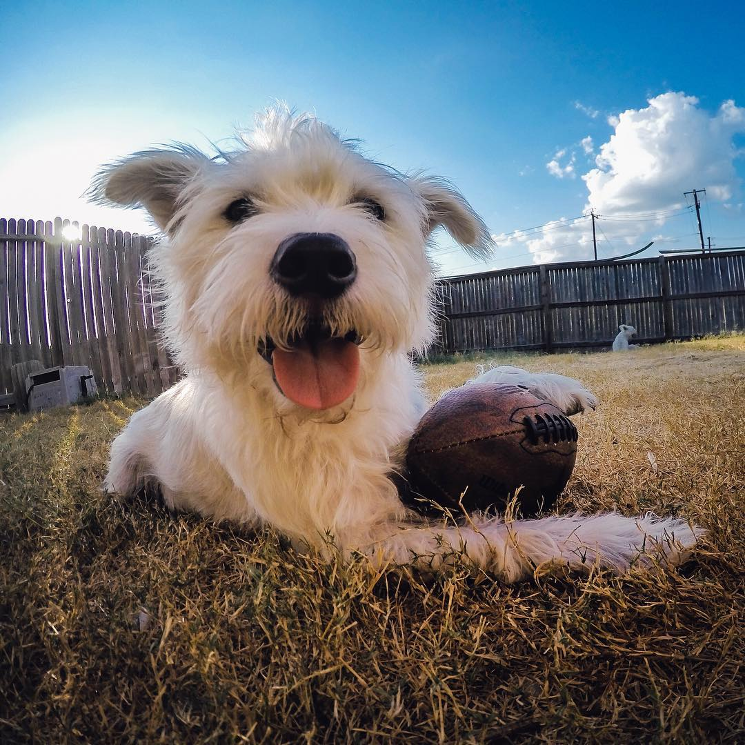Thankful for football in the yard + Rupert being all-time QB! #