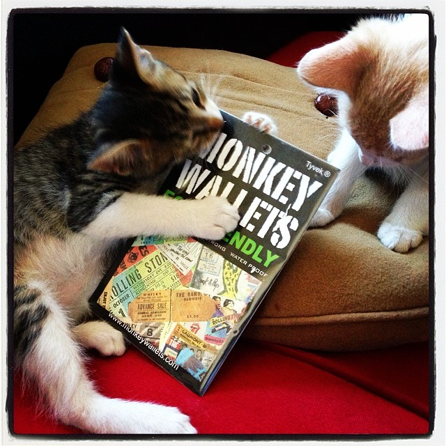 #monkeywallets #cat @monkeywallets