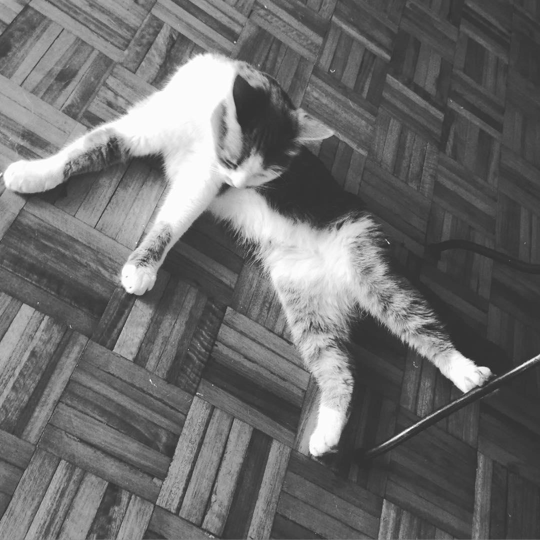 La patita, la patita de Soda #cat #soda #miau #gata #amorgatuno #lovecat