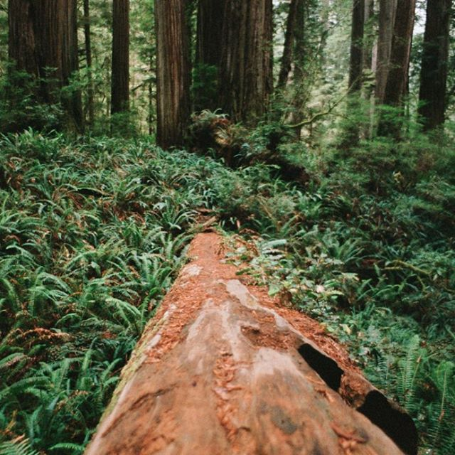 """The higher path"" shot for @westernriversconservancy's campaign to #savebluecreek and the surrounding 13.5 acres. This is the land that would otherwise be clearcut by a logging company and the forest would be sold for lumber. Link in bio to support the..."