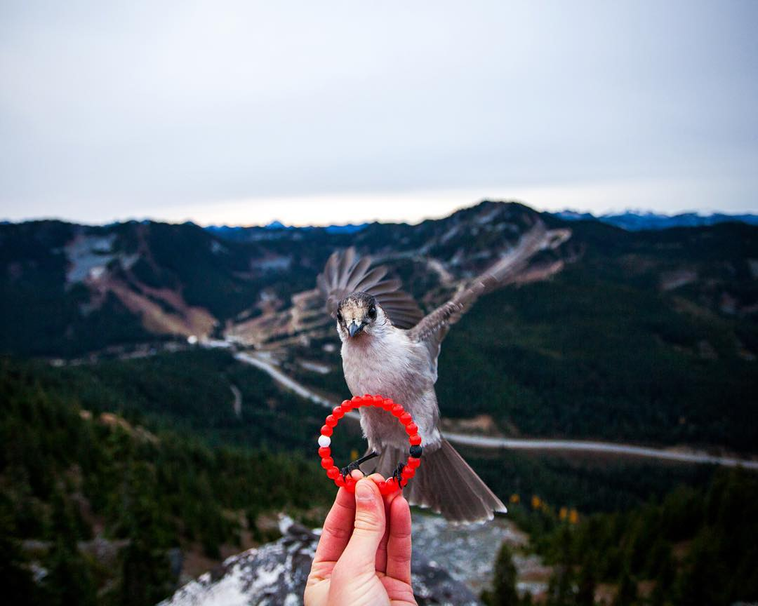 Swoop in and grab the limited-edition red lokai. Link in bio! #livelokai  Thanks @michaelmatti