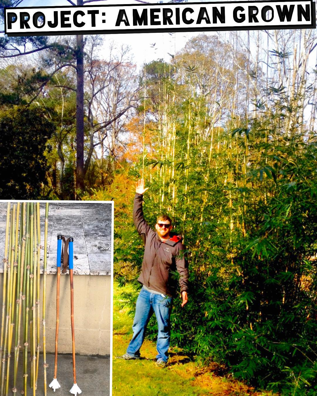 "Project: American Grown | Update No. 5  Our brother in botany and bamboo steward Josh Eisenberg just sent this report and photos of ""our"" Georgian bamboo from Nov. 24th: ""Boo got tucked in for winter nicely today with Mr. Natural compost and worm..."