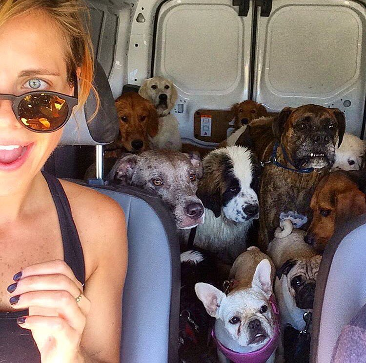 The best cure to the Monday Blues? A van full of dogs.