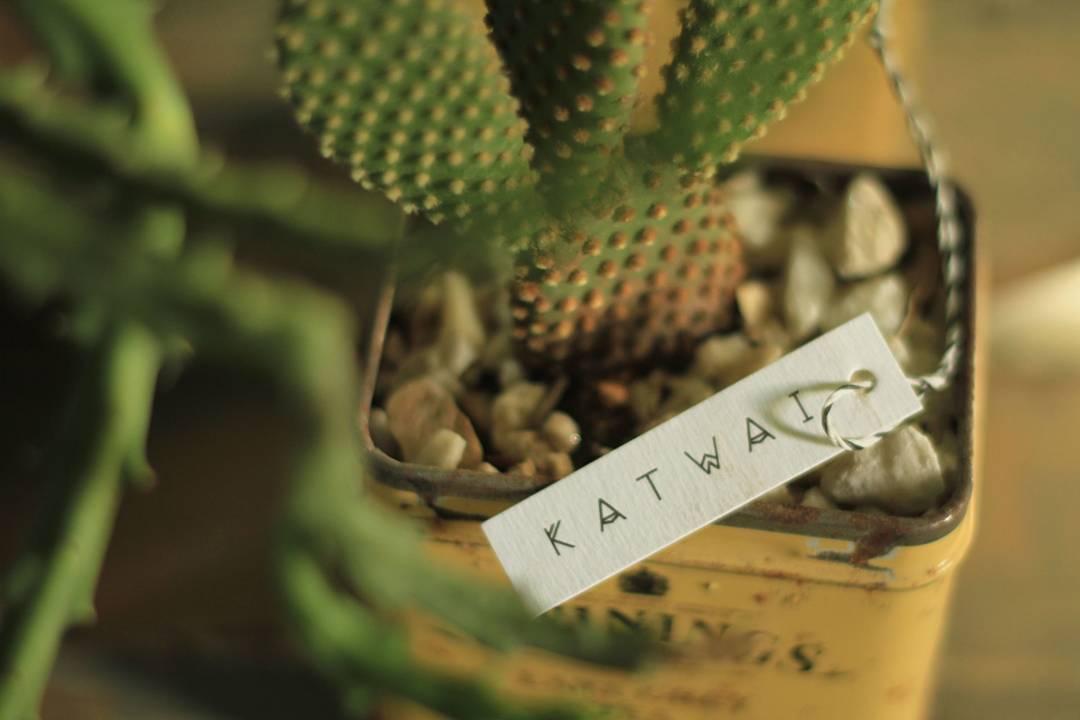 Katwai #cactus #lover