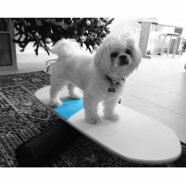 Dog on swell board woof woof