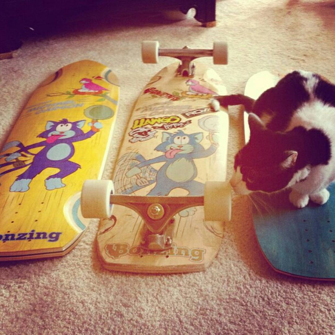 The MC Cat board is a bad ass, high performance skateboard that is kitty approved!  Put one under the tree today!  #mccatboard #bonzing