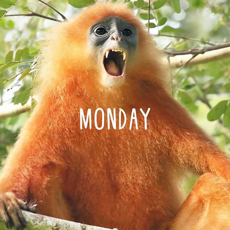That moment when you realize you have less than 2 weeks to get all of your #HolidayShopping done. Luckily, you can always give the gift of saving #rainforest! (Link in Bio) #Cuipo #SaveRainforest #Monday