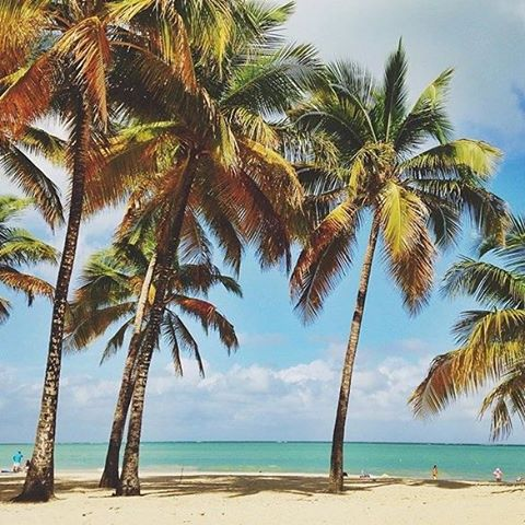 #miholidays mean… salty air and ocean breezes (hopefully!!) ☀ || with our friend @sunburntandsalty in #costarica || #getoutthere #myholiday #getsalty #palmtrees #oceanbreeze