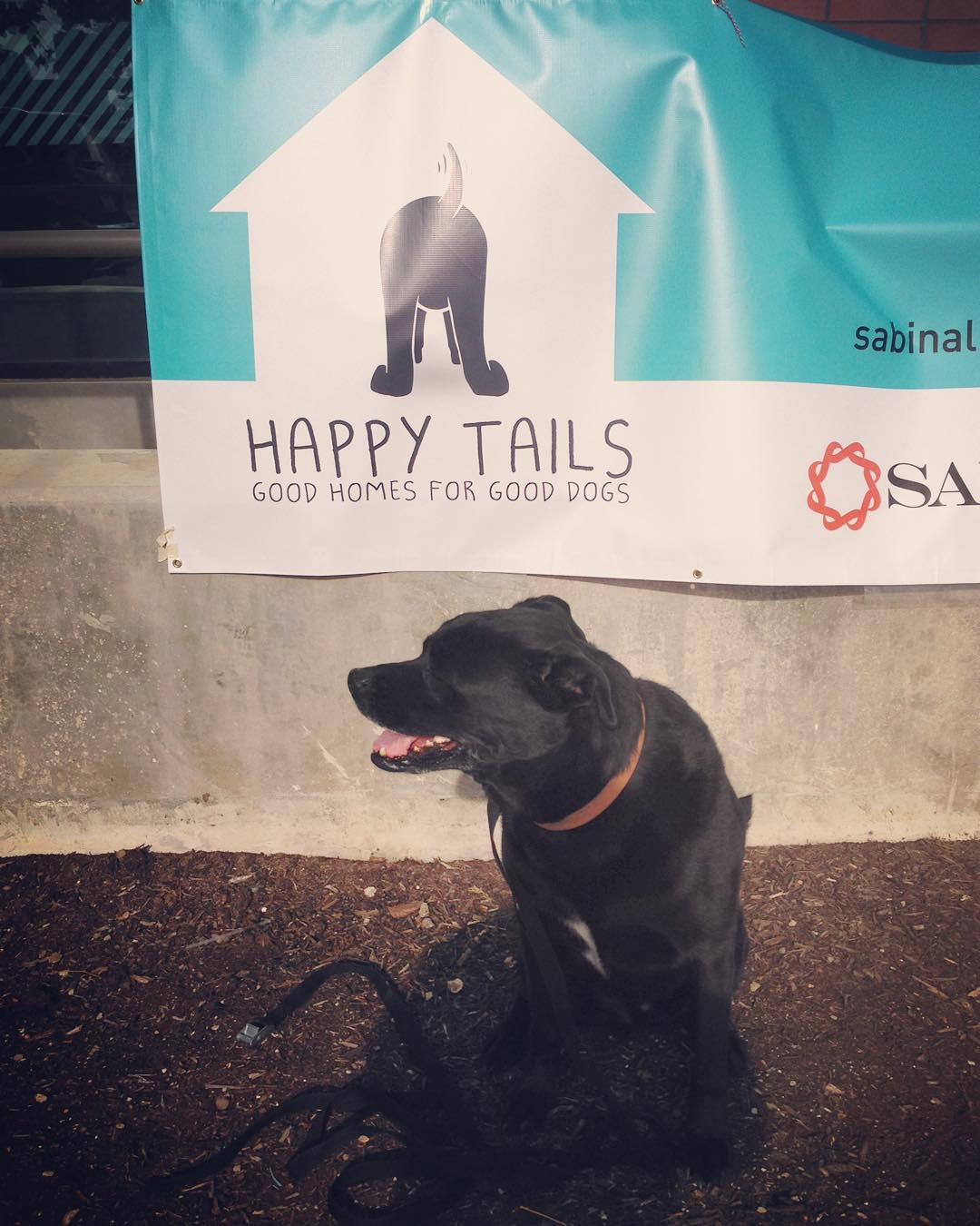 "Come out to Corazon right now till 4pm and check out the Happy Tails kickoff party/meet up. • • This program is dear to our hearts not only because we love our pups but it helps get your ""aggressive breed"" dog certified that they are not aggressive at..."