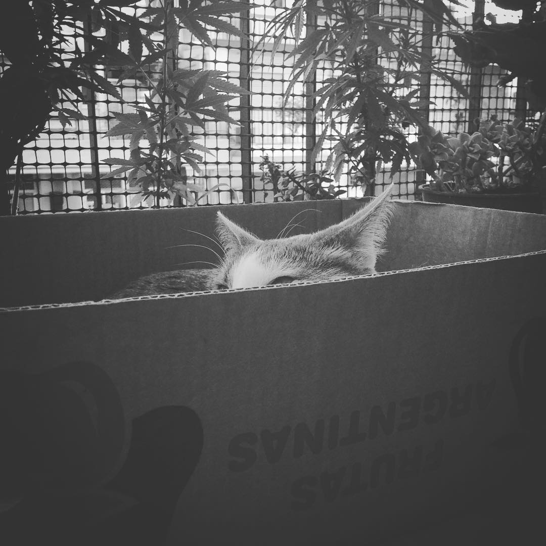 Piedra libre a Soda #cat #kitten #gata #amorgatuno #sodaestrella #box #byn