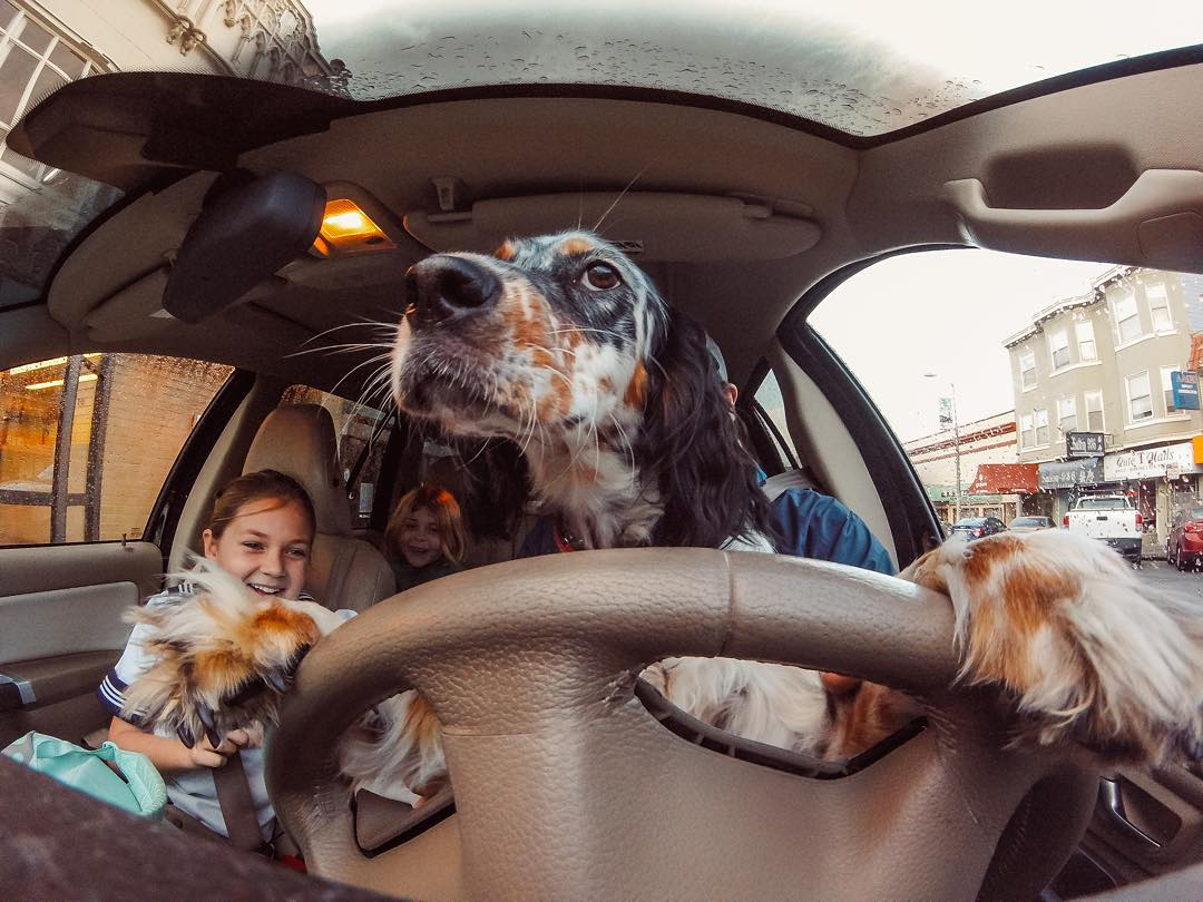 "How about a little caption contest action to kick off your Sunday? Share your wittiest caption for ""Greta behind the wheel"" in the comments and we will give away a #HERO4Session to our favorite! Come on, don't be shy. #"
