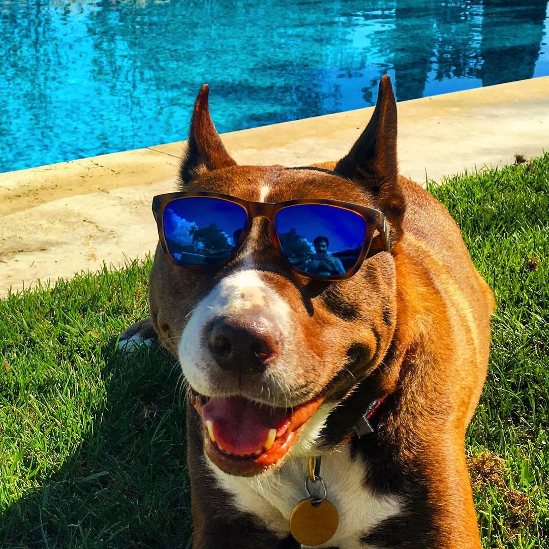 Q: What's the best way to take down the Monday Blues? A: A smiling dog in Sunskis. ✌