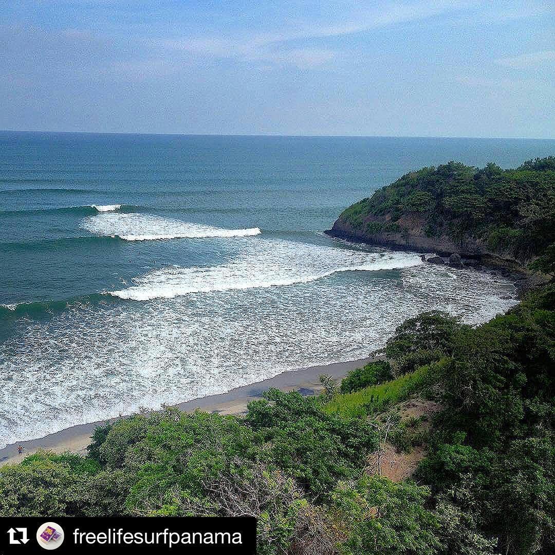 #Repost @freelifesurfpanama with @repostapp. ・・・ Report SurfeaPanama #FamilyFreeLife #accesorios #wax #leashes #grip #cover #fins #freelifesurf #bocasdeltoro #pacific #caribe #pacifico #centroamerica #olas #waves #freelifesurfpanama #swell #panamasurf...