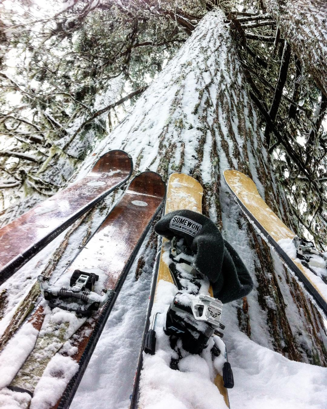 That's what we like to see. Wood skis and big trees. #revelstoke #wood #chasingsnowflakes #skiing #backcountry #skicanada #sopitted @skitrab_france #dynafit @somewon